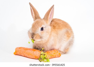 Cute red baby easter rabbit eating carrot on white background