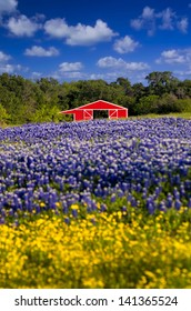 Cute red barn framed by a field of bluebonnets and sunflowers