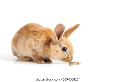 Cute red bunny sniffing rabbit feed on white background