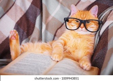 Cute red cat in glasses lying on sofa with book
