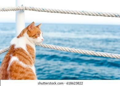 Cute rote Katze, die wegschaut sitzend und wartet auf den Hafen der Mittelmeerküste. Ansicht von hinten. Lebhaftes, horizontales Bild im Sommer mit blauem Hintergrund.