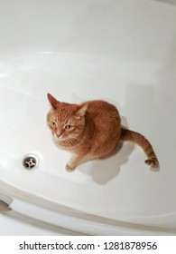 Cute red cat sitting in a bath with angry face