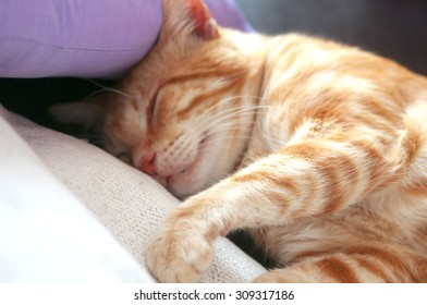 cute red cat sleeping on the couch next to a pillow
