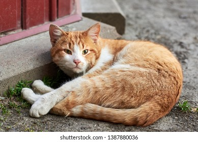 Cute red dirty stray cat lying on the ground, homeless animal theme