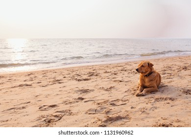 Cute red dog relaxing on the sandy beach during sunset