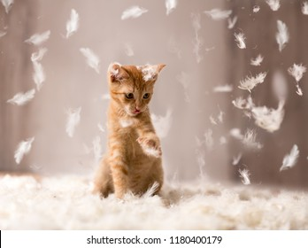 Cute red kitten playing in feathers