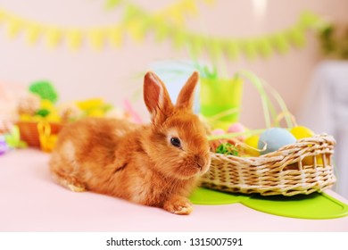 cute red rabbit with Easter basket close-up. The concept of Easter
