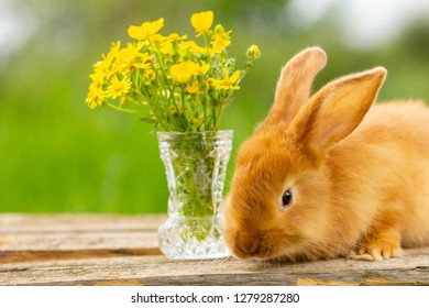 cute red rabbit sitting on a green natural background, spring mood.