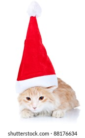 cute red and white cat wearing a santa hat on a white background