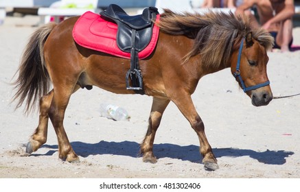 Cute red and white pony running at beach in summer