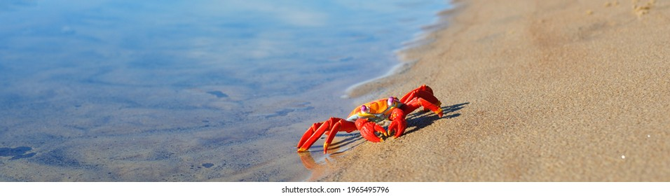 Cute red and yellow toy crab on a sandy seashore (beach). Panoramic image, copy space. Animals, nature, wildlife, science, zoology, biology, educational toys for kids. Play, joy, fun concepts