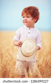 cute redhead, two years old baby boy walking through the field of ripe wheat