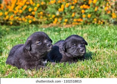 Cute regular common puppies in the garden