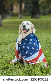 cute retriever dog wrapped in american flag sitting on grass in park