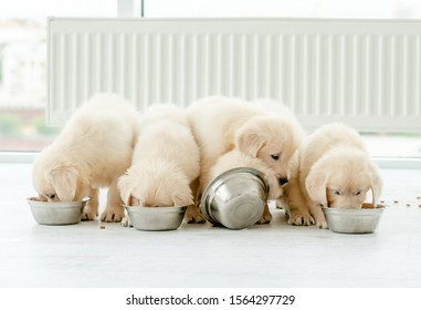 Cute retriever puppies eating from bowls at home