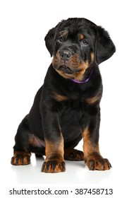 Cute Rottweiler puppy on white background