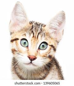 Cute sadly kitten.
