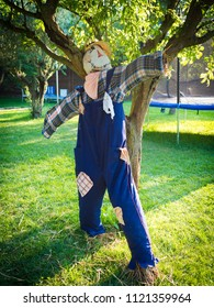 Cute scarecrow with a blue suit in an orchard.