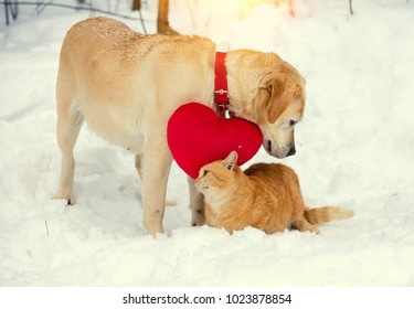 Cute scene. Dog and cat playing together outdoor in the snow in winter. Dog with toy heart on the neck. Cat rubbing against the dog. Valentines day concept.