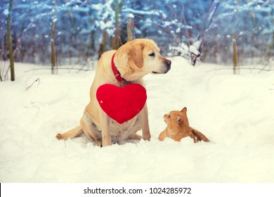 Cute scene. Dog and cat playing together outdoor in the snow in winter. Dog with toy heart on the neck.  Valentines day concept.
