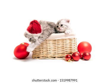 Cute Scottish kittens with new year hats in basket isolated on white background