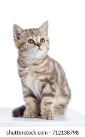 Cute scottish shorthair kitten cat sitting isolated on white