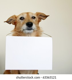 Cute scruffy terrier dog holding a blank sign