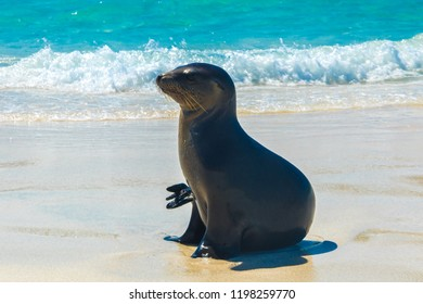 Cute sea lion at the beach