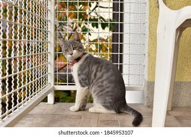 Cuto, gato de siete meses