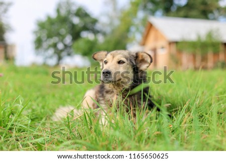 Cute Shaggy Dog On Grass Summer Stock Photo Edit Now 1165650625