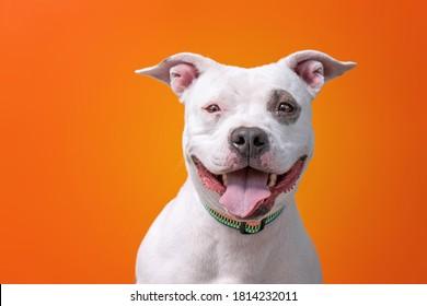 cute shelter dog in a studio shot