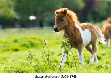 Baby Horse Images Stock Photos Vectors Shutterstock