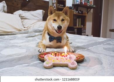 Doge Meme Images Stock Photos Vectors Shutterstock
