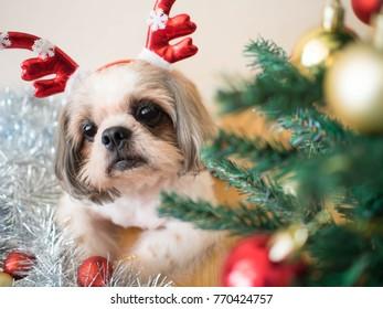 Shih Tzu Bauble Christmas Tree Decoration Gift//Present Dog