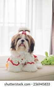 Cute shih tzu puppy is sitting on sofa in vintage image style