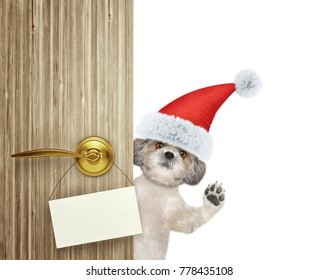 Cute shitzu dog in red christmas santa claus hat looking out the door entrance at home with empty card. Isolated on white background