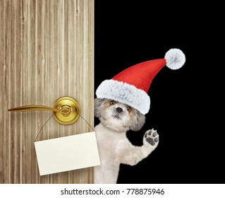 Cute shitzu dog in red christmas santa claus hat looking out the door entrance at home with empty card. Isolated on black background