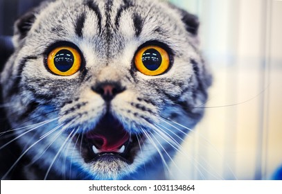 Cute shocked cat