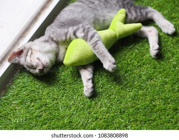cute short hair young asian kitten cat black and white stripes as house pet playing relaxing on green imitate grass mat indoor with a fish form cat toy