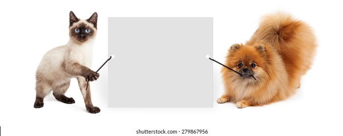 Cute siamese kitten and Pomeranian dog holding up a blank sign to enter your marketing message onto