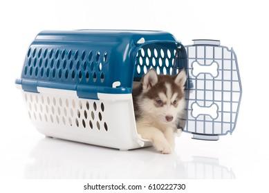 Prisoner Transport Images, Stock Photos & Vectors | Shutterstock