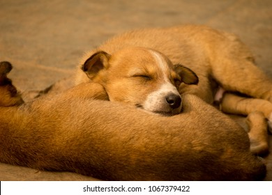 Cute sleeping street dog puppy. A scene from Kanpur, India