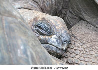 Cute sleeping turtle