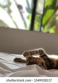 Cute sleepy kitten in sunlight