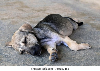 Cute sleepy puppy is lying on a pavement on a street.