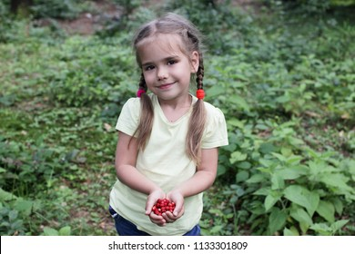 Cute small 5 years old girl with funny braids gathering wild strawberry in the forest, happy summertime concept, healthy food