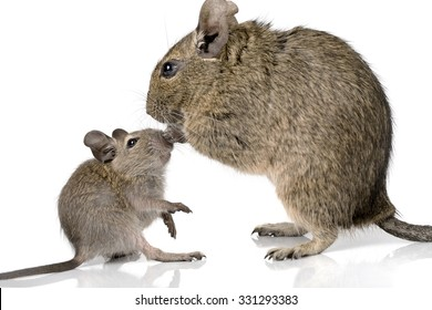 Mom Mouse