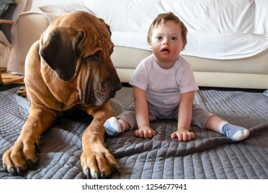 Cute small boy with Down syndrome playing at home with big dog of Fila Brasileiro breed