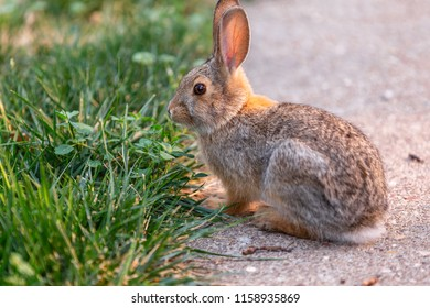 Cute small bunny