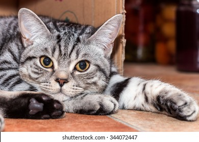Cute small cat laying in a warm box